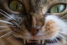 kitteh / gotta love cats!