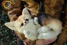 Tatlı Hayvanlar!