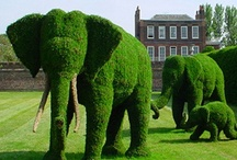 "Topiary /   ""Show me your garden and I shall tell you what you are."" Alfred Austin"
