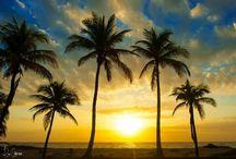 Florida My Home