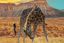 Africa-Epic Journey / Wild mosaics of Natures Wonders