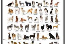 Mis amigos los Anímales / Perros, Gatos y de más animales