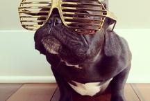 BuLL DOG!