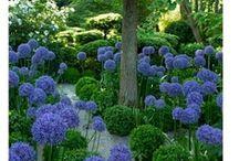 Garden / by Cristina Soriano