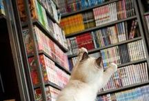 Library Cats / These cats are real cool