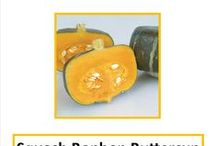 Squash / Learn about squash varieties.