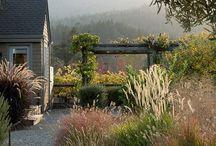 Garden Ideas / Ideas for a contemporary garden