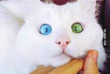 Pisicikler:)) / Meow!!! instagram dderyaa_ttt