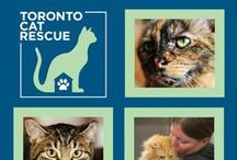Toronto Cat Rescue Information / Toronto Cat Rescue is a registered, no-kill charity run by volunteers. Our mission is to rescue and find homes for abandoned, sick or injured cats from situations of abuse, neglect or imminent euthanasia. Our vision is for Toronto to be a city in which no adoptable cat is killed and rescue organizations such as Toronto Cat Rescue are no longer needed.