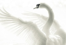 Created by Nature ~Fly / | Created by Nature | Birds | Flying Animals |
