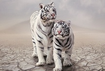 Created by Nature ~Animals / | Created by Nature |