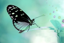 Created by Nature ~Butterflies & Dragonflies