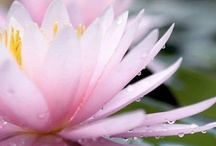 Created by Nature ~Flowers & Flora / | flowers | flora | created by nature |