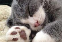 Cat / Cat cat cat