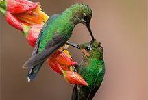Hummingbird / by Banu Yıldız Bayrak