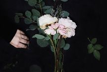 Plants & Flowers / by Lele
