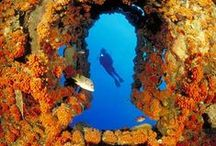 ABC Islands / Aruba, Bonaire, Curaçao. These beautiful islands offer a huge range of exquisite dive sites for all types of diver.