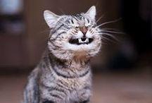 I think I saw a Putty Cat
