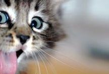 Here Kitty Kitty / Kittens
