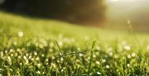 Lawn Care Tips / Lawn care tips for everything from edging and trimming to better mowing techniques.