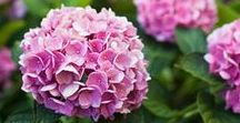 Flower Gardens / Flower garden tips, ideas and inspiration.