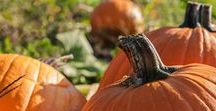All Things Fall / Everything you need for the fall cleanup season.