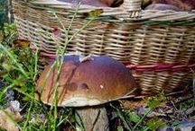 Bezmasá jídla - houby
