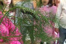 Il Farfallorto / Il laboratorio nasce per dare ai bambini la possibilità di conoscere le farfalle da vicino, imparare anche a prendersene cura, tra gioco e scoperte continue