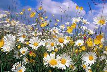 Verano... / El verano y su luz, su ambiente...