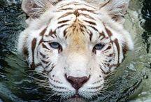 Animals :-) / animals
