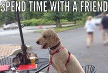 dogosophy / Dog philosophy by Louie Stroobie