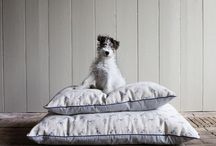 Dogs at Home / here we've compiled some dog-related pins that we love for around the home. dog beds, crates, blankets and beautiful rooms with a pooch enjoying him or herself in the space.