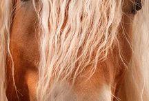 Mustang / Un rêve de petite fille...