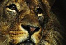 Mammalia Spirits / Tigers, lions, cats, leopards