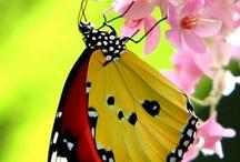 Hummingbirds, Butterflies and Dragonflies