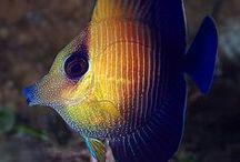 Fascinating sea creatures