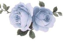 roses shabby chic