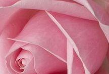 Kedvenc virágaim / Csodás virágokról