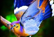 Taking Flight in Colour