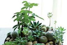 Green, green, greeeeeener!!! / Inspiring gardens,pottery, plants, succulents...