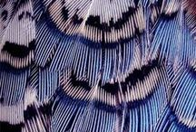 Birds and feathers / Birds with the most amazing colors. Feathers can have the most beautiful and inspiring patterns.