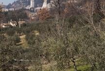 Italy, Umbria - paesaggi - landscapes