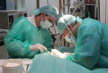 Servicios Hospital Veterinario Cruz Cubierta / Imágenes de los servicios que prestamos en el hospital veterinario Cruz Cubierta de Valencia.