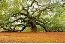 my kind of tree