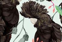 JUL   Birdlife / Pattern designs and developmental work based on a Birdlife theme.