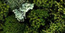 FARBE // Greenery 2017 : COLOR // Greenery 2017 / >> Pantone, Trendfarbe Grün, Grüntöne : trendy color Grenn, shades of green