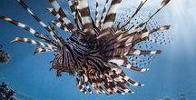 FAUNA // Unterwasserwelt : underwater world / Wasser, Meer, Fische, Seepferdchen, Quallen, Licht, Farbe, Schatten ... : Water, sea, fish, seahorses, jellyfish, light, colour, shade...