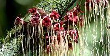 FLORA // Pilze, Moose und Gewächse :: Mushrooms, mosses and plants / Formen und Farben von Gewächsen, Pflanzen und Pilzen, Strukturen und Oberflächen von Moos : Shapes and colours of plants, plants and fungi, structures and surfaces of moss