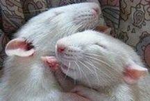 Mäuse + Ratten / mice + rats