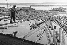 Flottarkärlek / Bilder från Landsarkivet i Härnösand som visar flottare i arbete. Pictures from the Regional Archive of Härnösand showing raftsmen at work.